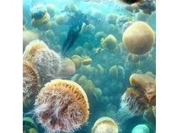 Картинки медуз 1