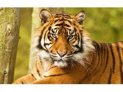 Скачать картинки про животных бесплатно 3
