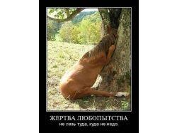 Скачать картинки про животных бесплатно 5