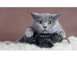 Креативные фото на фотоаппарате зенит 3