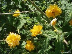 Фото цветы красиво цветущие 2