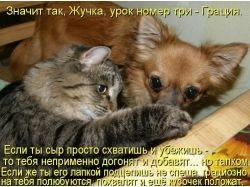 Прикольные фото собак и кошек
