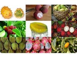 Экзотические фрукты фото индии 2