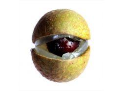 Экзотические фрукты фото индии 3
