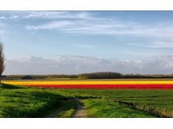 Фото цветы дорога 3