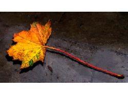 Осенний кленовый лист фото
