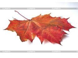 Осенний кленовый лист фото 4
