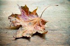 Осенний кленовый лист фото 6