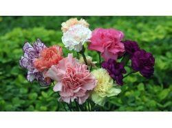 Красивые цветочки картинки 5