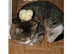 Котики и собачки 2