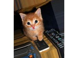 Котики и собачки 3