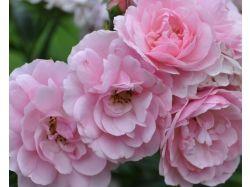 Лето картинки цветы 2