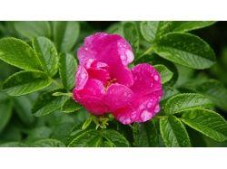 Лето картинки цветы 4
