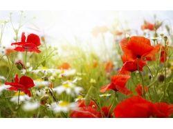 Лето картинки цветы 5