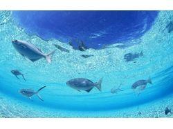 Природа картинки рыбы 2