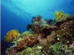 Природа картинки рыбы 3