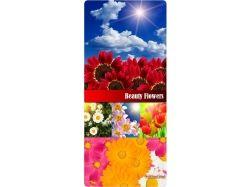 Скачать бесплатно картинки цветы красивые