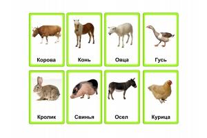 Цветные картинки для детей животные