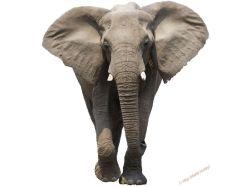 Картинки слон для детей 2