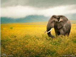 Картинки слон для детей 4