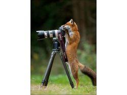 Картинки животные в паре 6