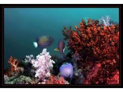 Подводный мир бразилии 3