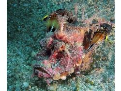 Подводный мир бразилии 4