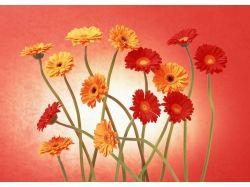 Фото цветов герберы 6