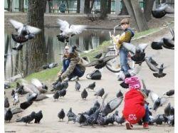 Дети голубей фото