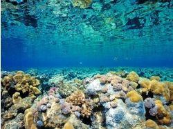 Подводный мир charles