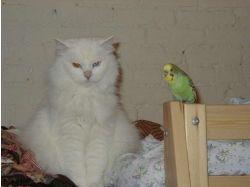 Прикольные картинки  с попугаями 3