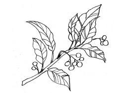Рисунки для батика 2
