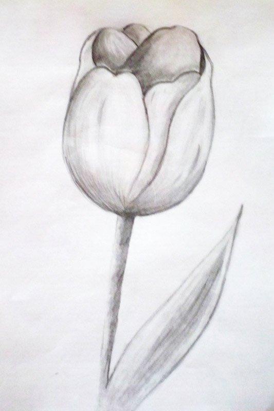 салоне тюльпаны рисовать карандашом картинки нас одни самых