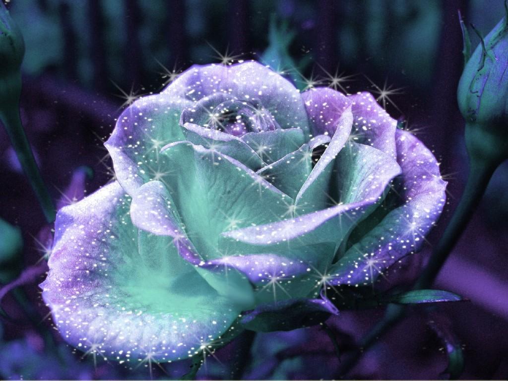 картинки блестящие розы светятся широкими