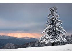 Ель фото зима