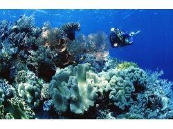 Видео подводный мир чёрного моря
