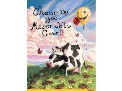 Корова прикольные картинки