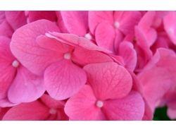 Широкоформатные картинки розовые