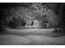 Картинки зима в разгаре