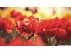 Картинки цветы красные
