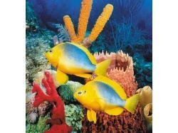 Как сделать подводный мир апликацию