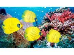 Обои на рабочий стол подводный мир кораллы