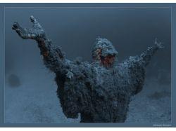 Кусто подводный мир фотографии