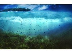 Обои для рабочего стола природа лес подводный мир