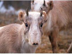 Картинки животные в степях