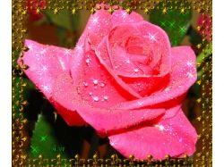 Красивые анимационные картинки цветы
