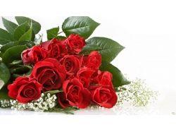 Картинки цветы для любимой