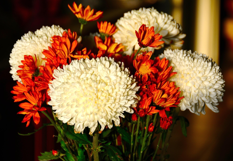 картинки на рабочий стол хризантемы букет получился милым