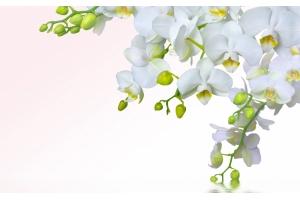 Обои орхидеи на рабочий стол
