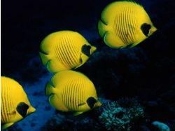 Баги подводный мир деньги